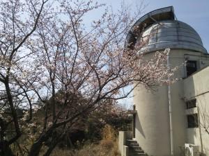 京大花山天文台の別館横の桜